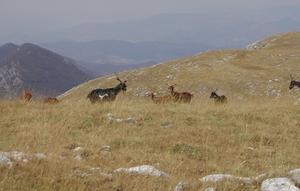 vue sur la vallée à partir du Chiran